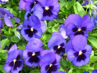 Alcazaba Flowers