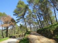 Caminito Del Rey Trees