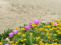 Wild Flowers Beach