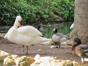 Maria Luisa Park Birds
