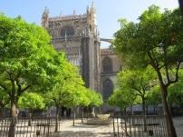 Sevilla Cathedral Trees
