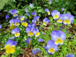 Wild Flowers Sintra